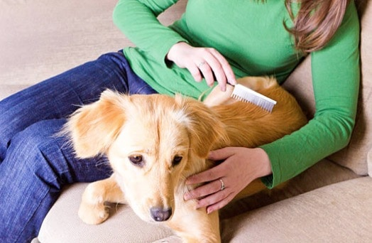 chien brosse femme humain