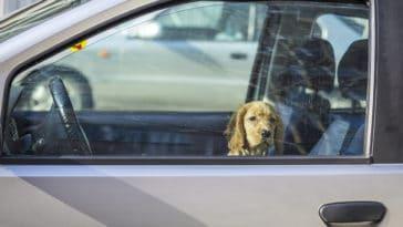 chien voiture soleil
