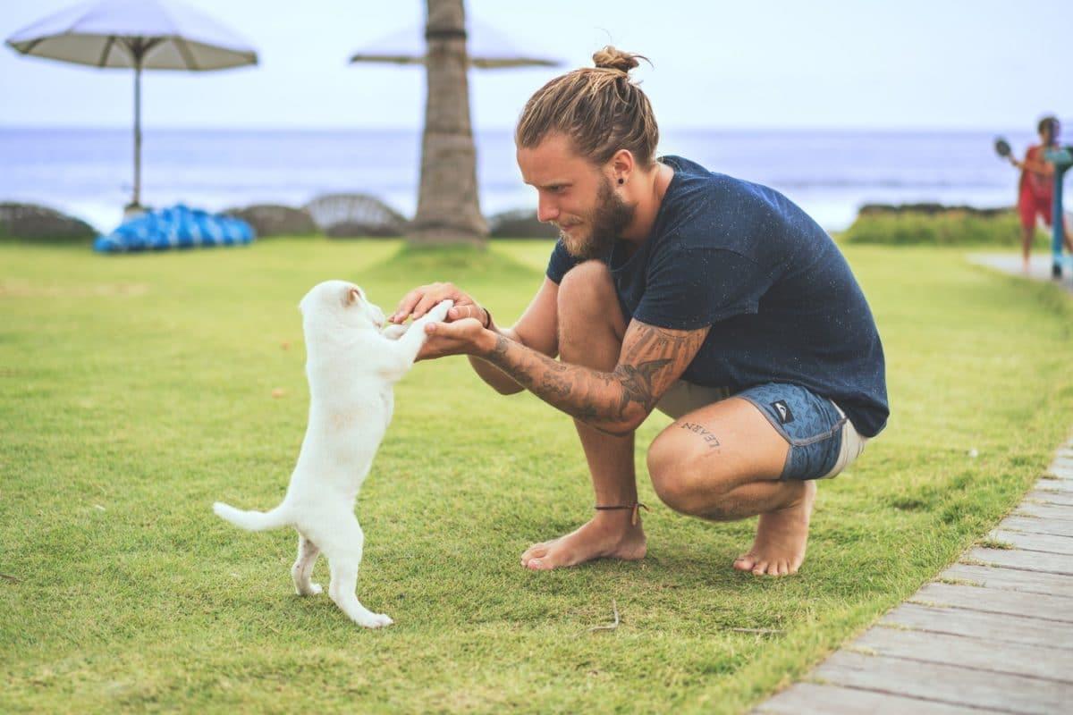 chien joue homme humain câlin