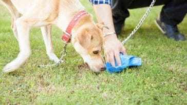 chien sent humain ramasse crotte excrément besoins