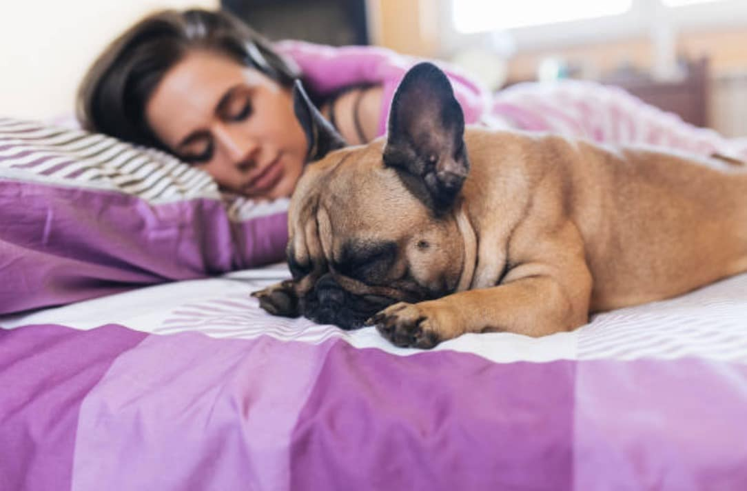 chien lit dort humain femme