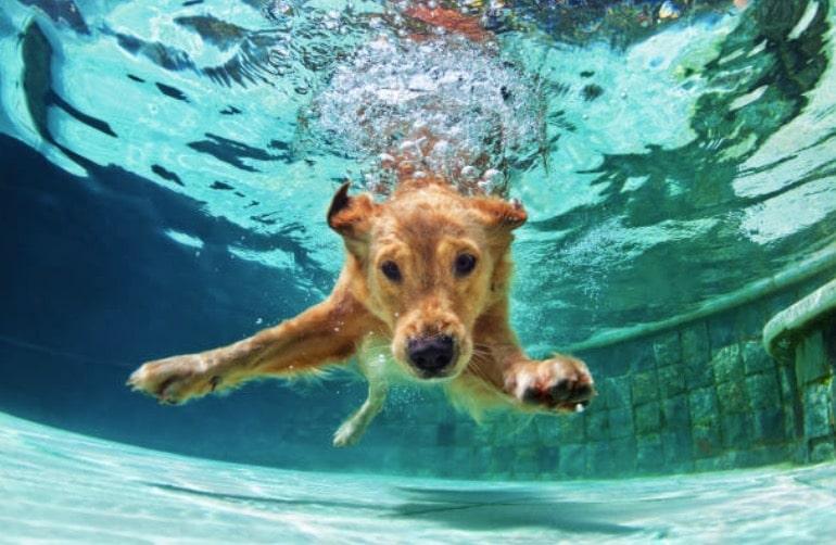 chien eau nage