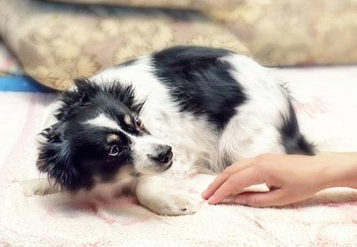 chien peur main caresse