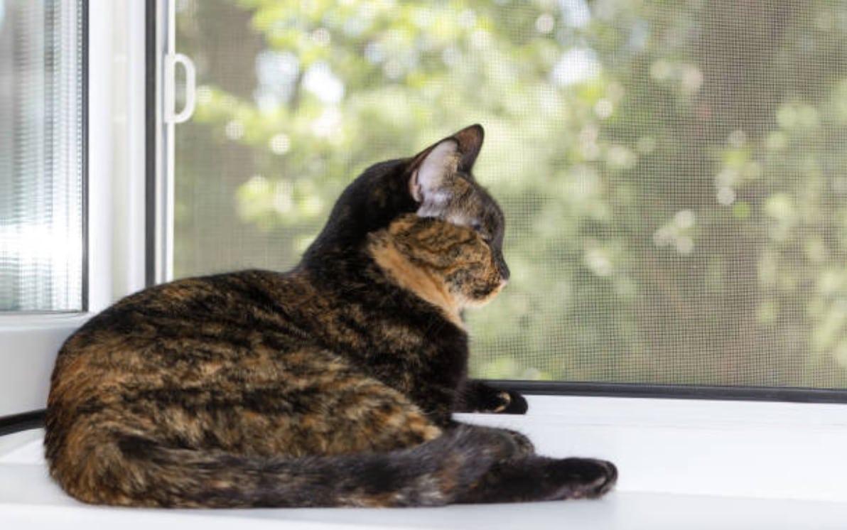 chat couché fenêtre moustiquaire