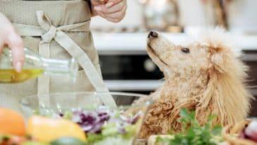 chien huile d'olive