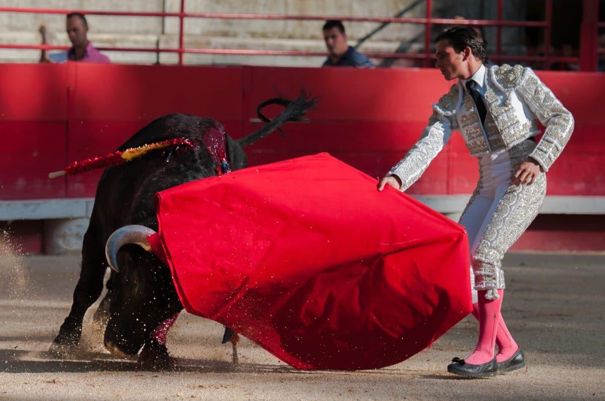 taureau torero corrida