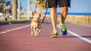 chien promenade bitume