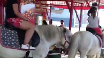 manèges poneys