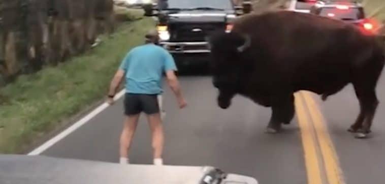 bison homme