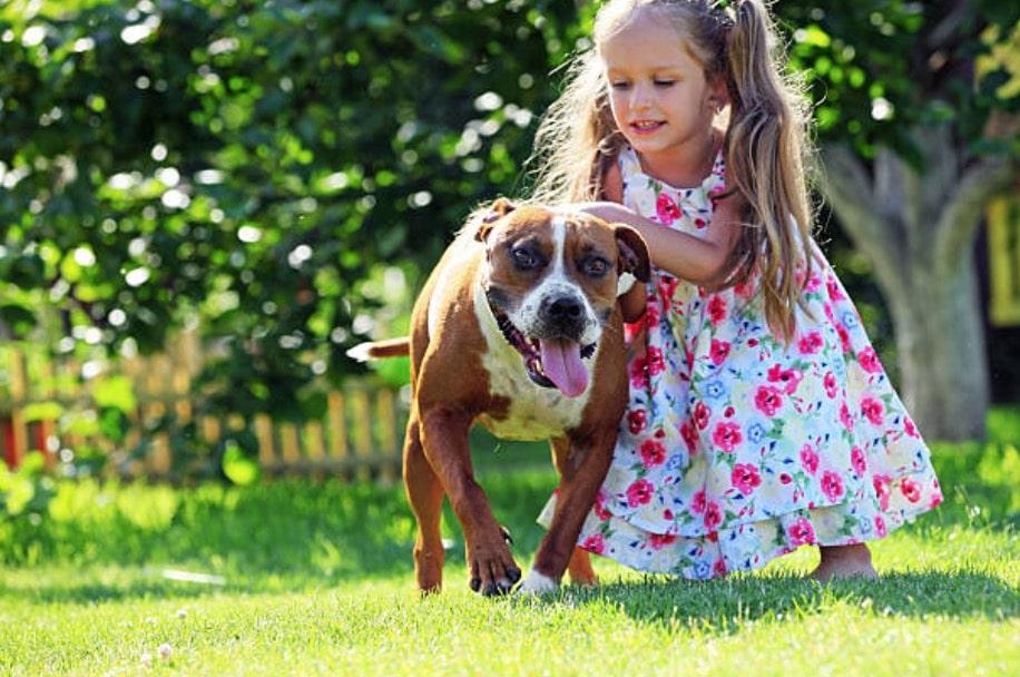 chien pitbull enfant fille câlin humain