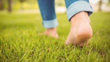 marche herbe