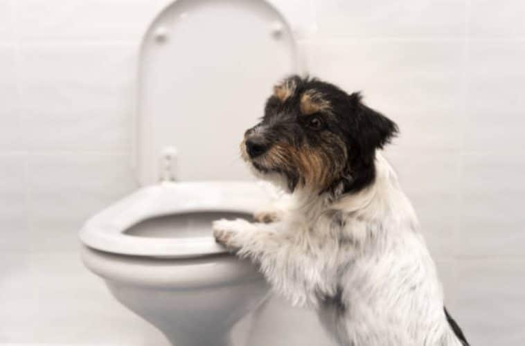 chien toilettes