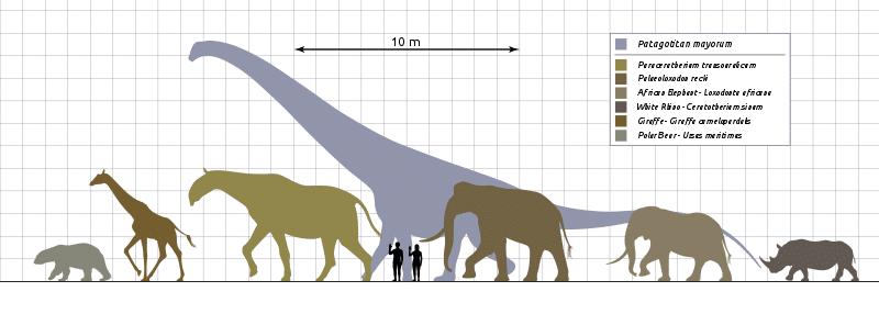 titan de patagonie dinosaure