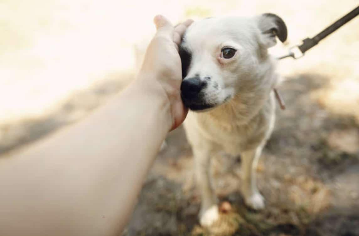 chien câlin peur caresse laisse