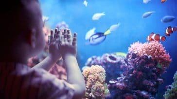 aquarium poissons enfant