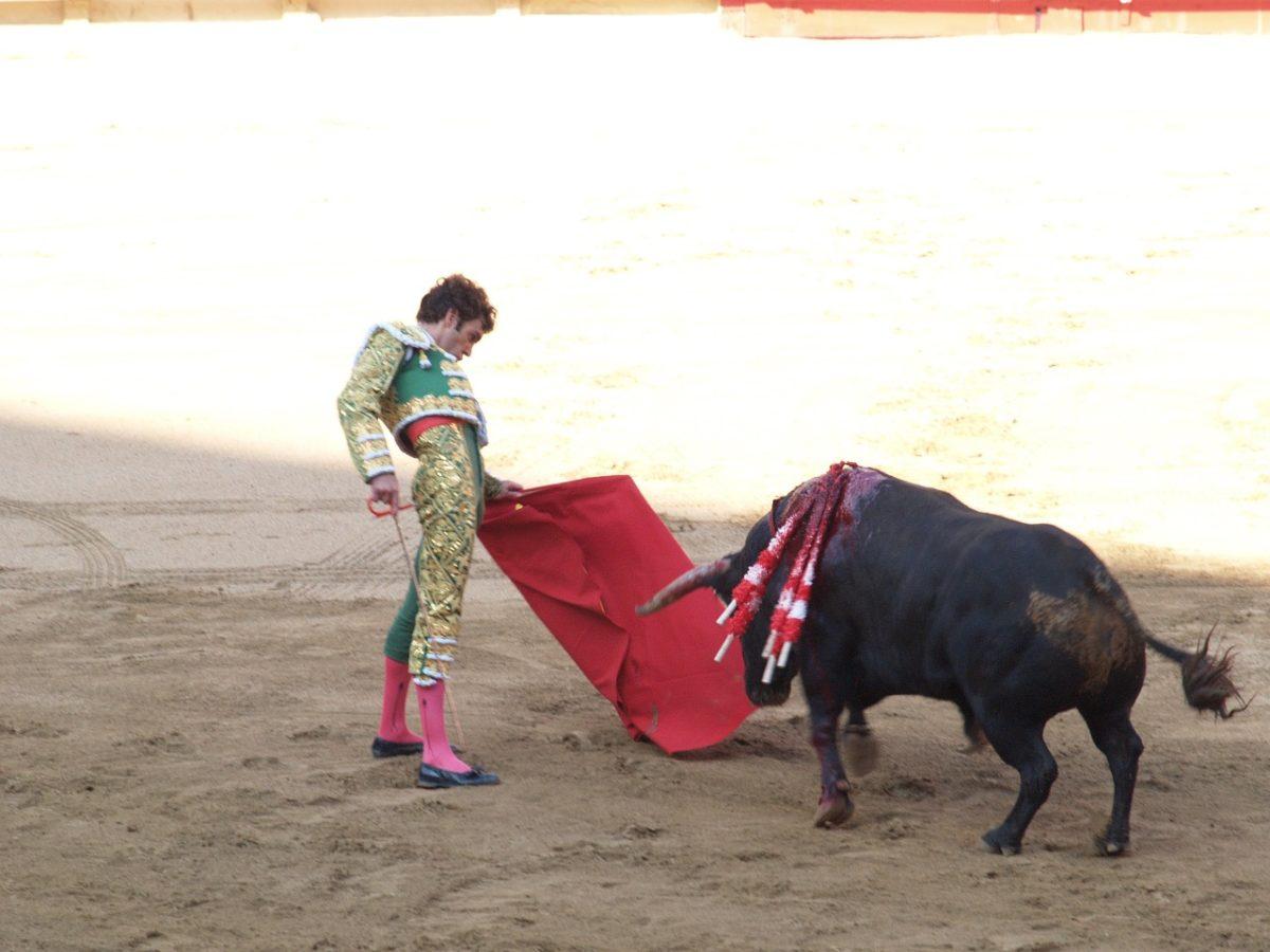 Torero taureau corrida