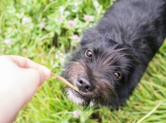 chien mange friandise