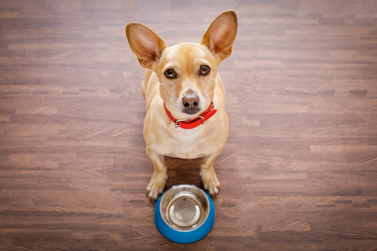 chien alimentation