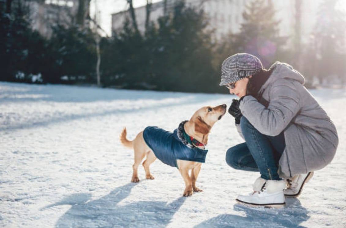 chien manteau neige humain hiver froid