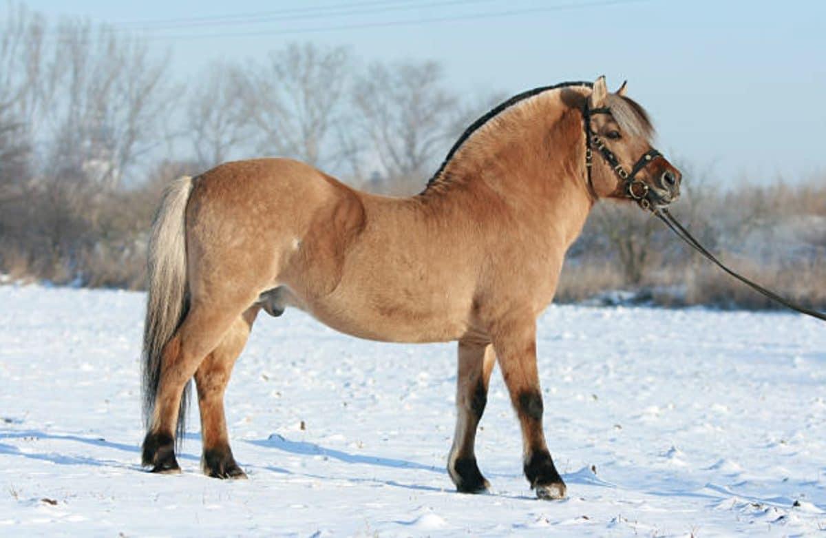 cheval fjord