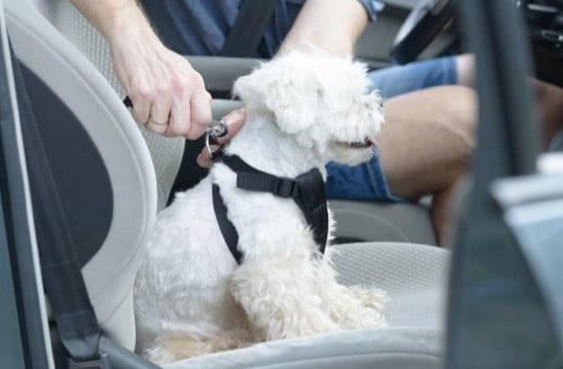 chien voiture harnais ceinture