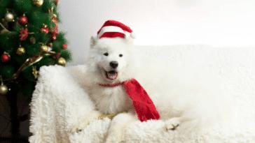 chien déguisé noel