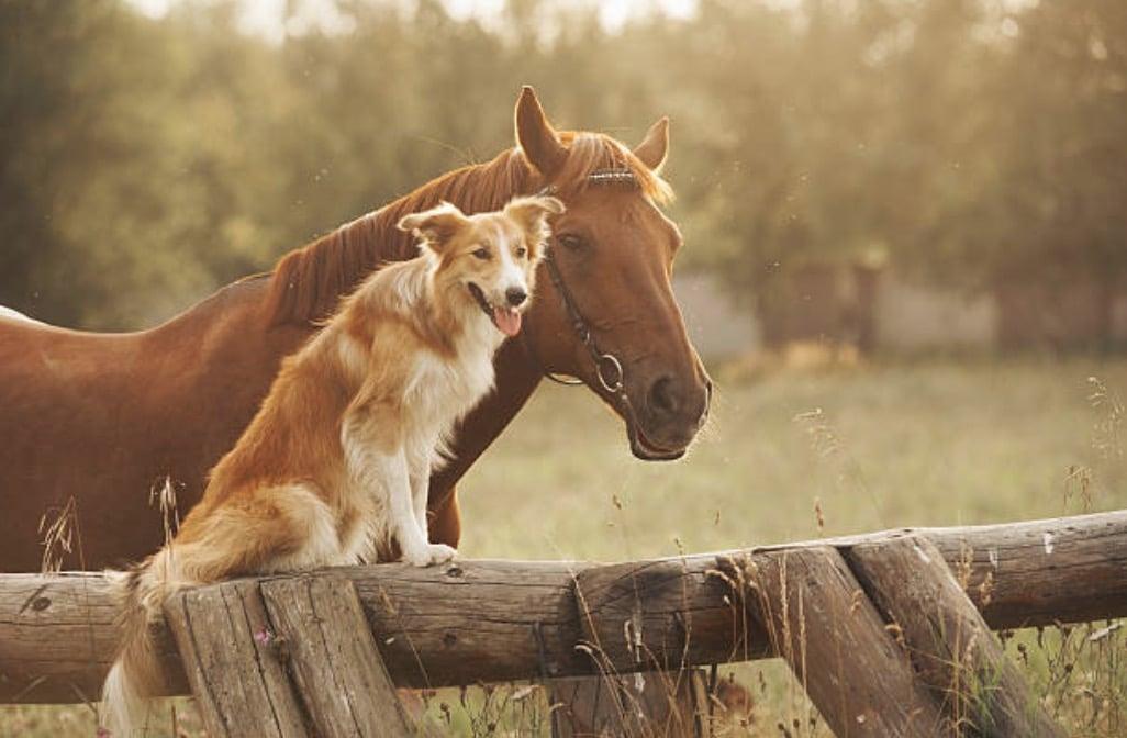 chien cheval