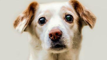chien triste portrait
