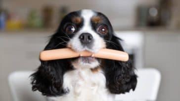 chien mange