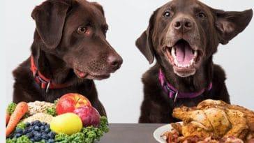 chien légumes viande