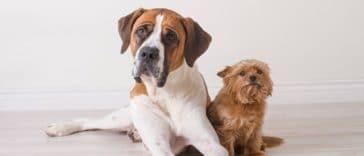 petit grand chiens