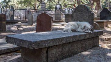 chien couché tombe cimetière