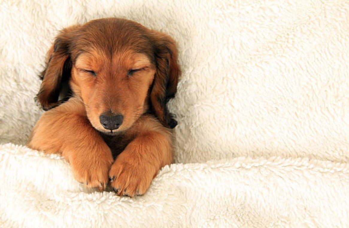 chien dort