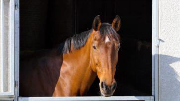 cheval box