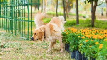 chien urine plantes