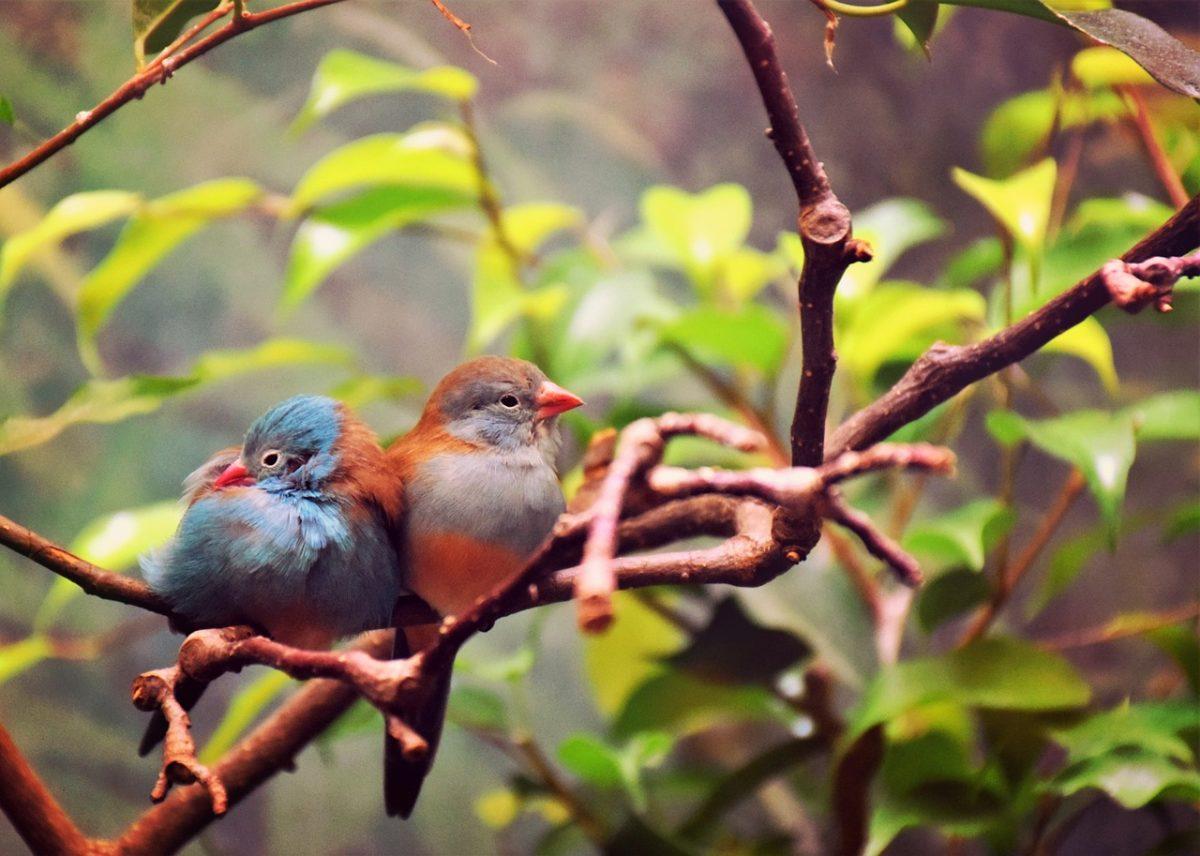 oiseaux couple