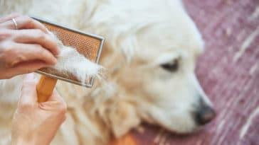 poils de chien