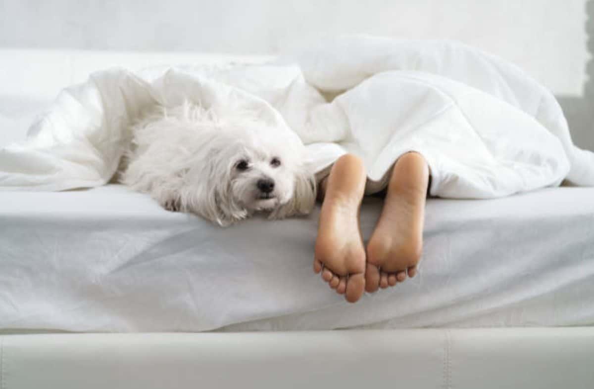 chien dort pieds