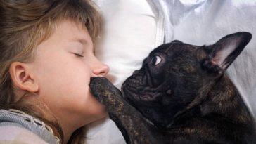 chien réveil