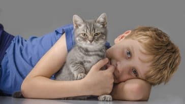 chat câlin enfant