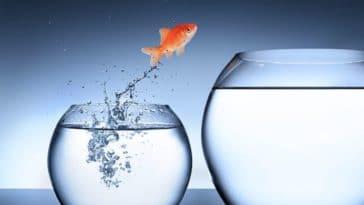 poisson saute