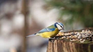 oiseau mange