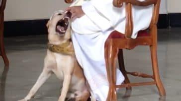 chien prêtre