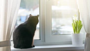 chat anxiété de séparation