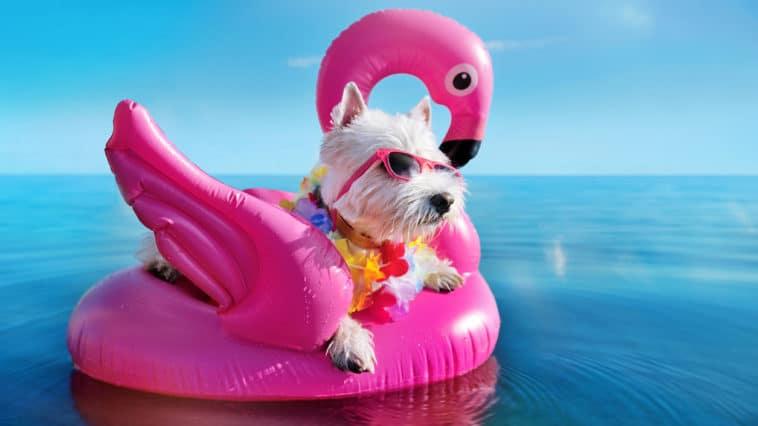 chien soleil