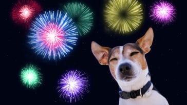 chien feux d'artifice