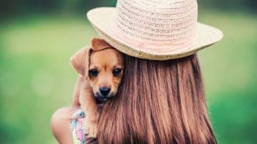 chien porté