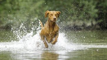 chien cours d'eau