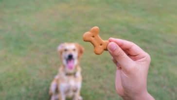 chien friandise