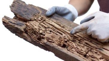 bois termites